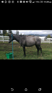 3 Year Old Thoroughbred