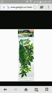 WANTED..... Reptile plants