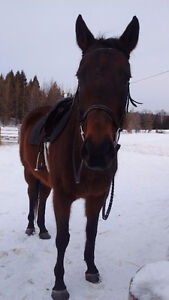 Broke to death thoroughbred mare