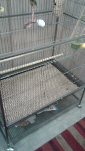 Birds Flight Cage with Finches