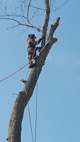 PROFESSIONAL TREE SERVICES/ALL SEASON TREE SPECIALISTS