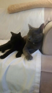 Zorro & 2C - Need a new home