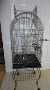 brand new conure cage and green budgie for sale