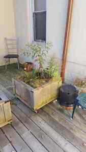 Cedar planters London Ontario image 2