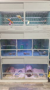RUFFIN'S PET STRATFORD- LIVE ANIMALS & PET FOOD SPECIALTY STORE Stratford Kitchener Area image 7