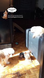 DAYCARE/SLEEPOVERS(SMALL DOGS)IN CAGE-FREE HOME SINCE 2010 West Island Greater Montréal image 6