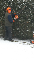 Tree and/or Hedge Trimming or Removal
