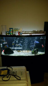 72 gallon aquarium for sale North Shore Greater Vancouver Area image 1