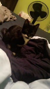 Male cat needs new home