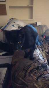 Four cats give away!(Post will be up till 19 October) London Ontario image 4