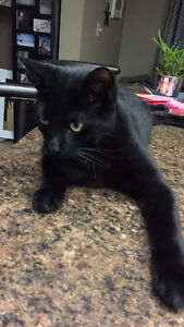 LOST: Black male cat.