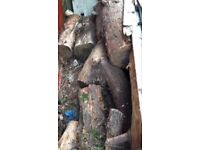Logs of wood for collection