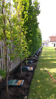 Tree Planting & Landscaping; Fungicide Insecticide Treatments+++