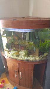 Aquarium 45 gallons en coin