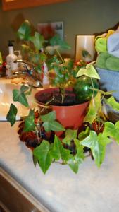House plants for sale