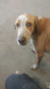 Stray dog at rock island road