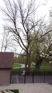 Professional tree removal and Branch Removal Service.