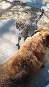 Free farm cats