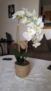 OWNER MOVING - Artificial Potted Plant White Orchid