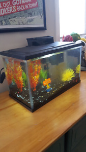 10 Gallon Aquarium with everything