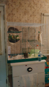 Male rat and cage