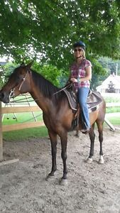 English and/or Western Horse Riding Lessons London Ontario image 1