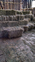 Hay for Sale - Small Squares 1st Cut