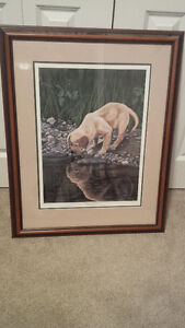 Puppy Reflections