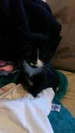 Beautiful Kittens for sale 200 each