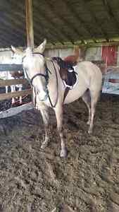 ISO horse board in the Airdrie/Sage Hill/Balzac area.