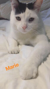 MISSING WHITE CAT IN MOUNT HOPE AREA