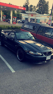 1999 Ford Mustang Mustang GT 35th anniversary Convertible