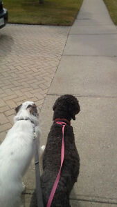 ******PET SITTING (REGISTERED VETERINARY TECHNOLOGIST)****** Kitchener / Waterloo Kitchener Area image 5
