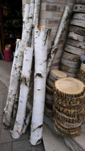 Live Edge: birch branches, round slabs, stumps, logs