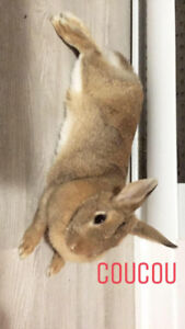 Cute rabbit looking for a new home