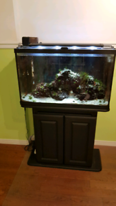 Salt water tank with fish