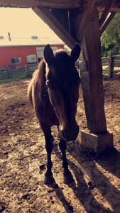 Horses For Sale!