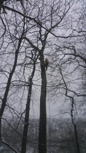 Tree services///free estimates