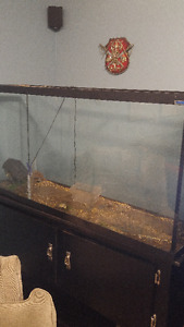 60 Gallon fish tank (No cracks but cannot hold water)