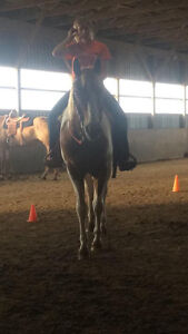 Tonto-12 year old paint horse London Ontario image 4