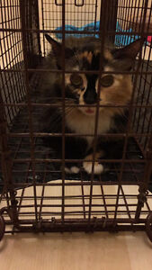Looking for home for feral cat