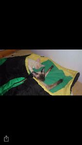 9 month old siamese cat looking for a home
