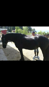 Massage, saddle fitter, chiropractic adjustments etc