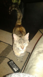 Found Stray Female Cat Looking For Her Loving Home
