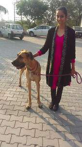 Dog Walker and Animal Sitter Services.