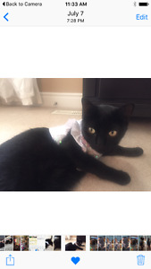 Reward for missing black cat