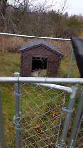 DOG KENNEL Peterborough Peterborough Area image 1