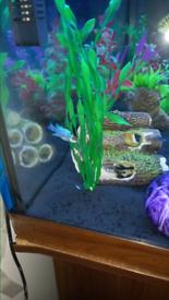 Juwel 250litre fish tank