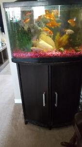 20 Gallon fish aquarium and stand