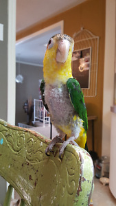 Look for a good home for our bird